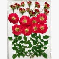 Các loại Ép Khô Red Rose Flower + Tiệc Cưới Lá Mặt Dây Chuyền Vòng Cổ Trang Sức Điện Thoại Trường Hợp Craft Phụ Kiện TỰ LÀM Design-1607