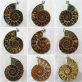 Ancient Wrapped Natural Ammonite Fossil Stone Opened Pendant Bulk Wholesale