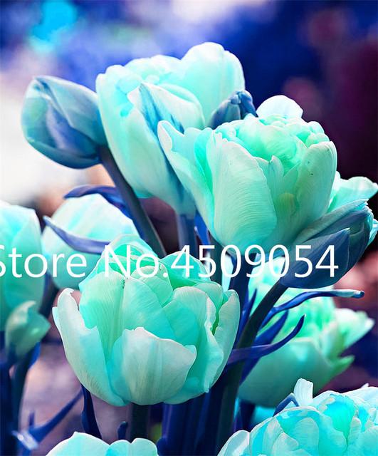 Bonsai 300 Pcs Mixed Tulip Plants Rare Beauty Bonsai Flower Seedsplants Ice Cream As Beautiful Tulips Perennial DIY Home Garden