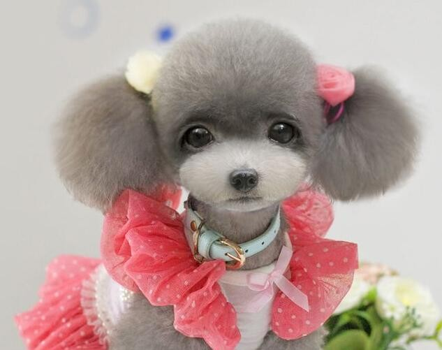Online Buy Wholesale grooming flowers dog from China grooming ...