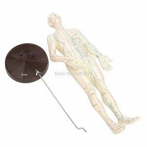 """Image 3 - """"Menselijk Lichaam Acupunctuur Model Mannelijke Meridianen Model Grafiek Boek Base 50Cm"""
