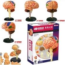 4d mestre cérebro humano modelo estrutura montada anatomia dimensional 32 pces conjunto