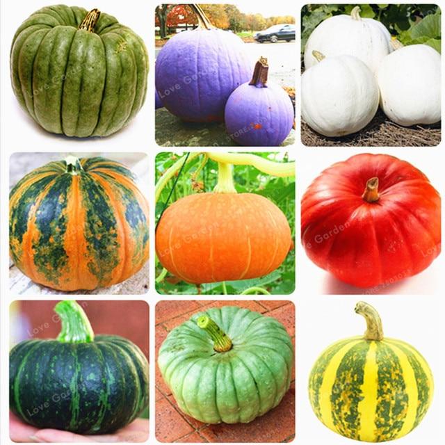 10 unids/bolsa plantas de bonsái de calabaza verduras orgánicas alimentos ricos en nutrientes NON-GMO plantas de bonsái comestibles para jardín doméstico