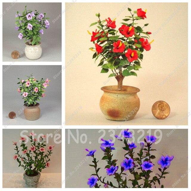 Mini bonsai tree hibiscus seeds 120 pcs packrare bonsai flower mini bonsai tree hibiscus seeds 120 pcs packrare bonsai flower tropical ornamental mightylinksfo