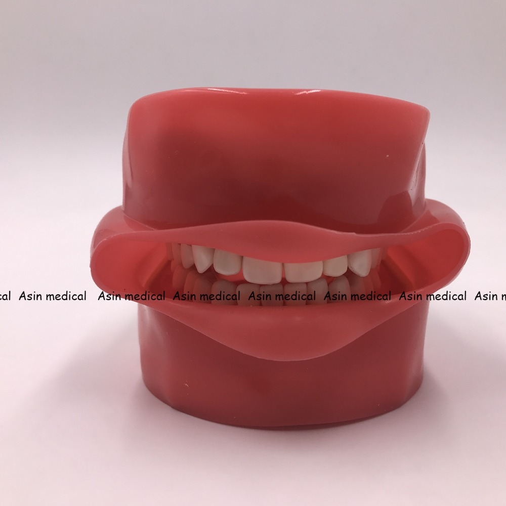 Sistema di Pratica di alta Qualità Simulazione Orale Dentale Phantom Testa per la Scuola Dentale - 6
