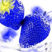 Лучшие Продажи! 50 Шт./лот Синие Редкие Фрукты И Овощи Клубника Семена Главная Сад Фрукты Растение в горшке, # VYO7Y1