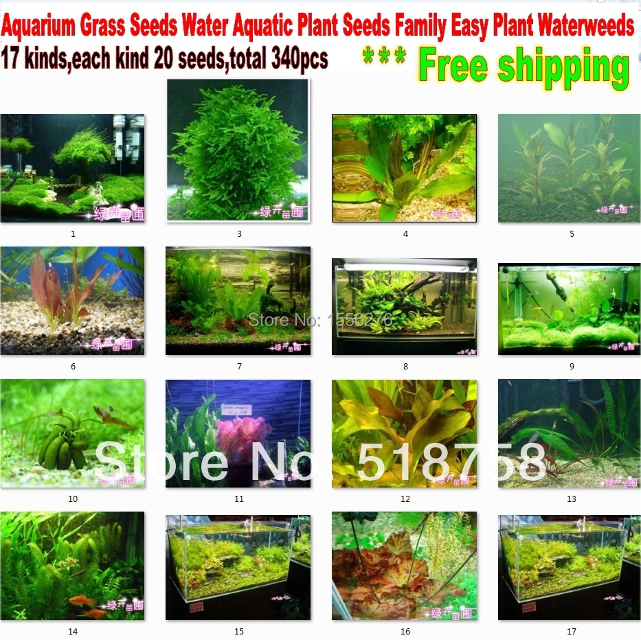 Buy 340 seeds 17kinds aquarium grass seeds water aquatic plant seeds family - Indoor water plants list ...
