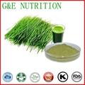 Pó orgânico da grama do trigo/jovens folhas de trigo em pó/pó de plântulas de trigo 10:1 300g