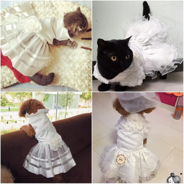 traje de novia de lujo princesa gato perro novia vestido de gato