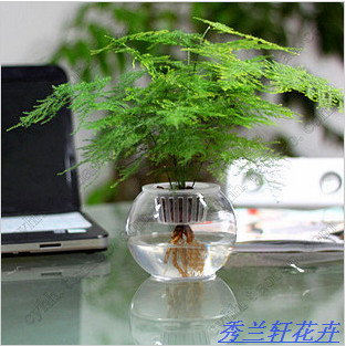 Office Desk Small Bonsai Hydroponic Asparagus Air Purifying Plants Mini Plant Set