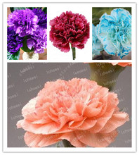100 Pcs/ Rare Carnations Bonsai Flowers Dianthus Caryophyllus For Home Garden Planting