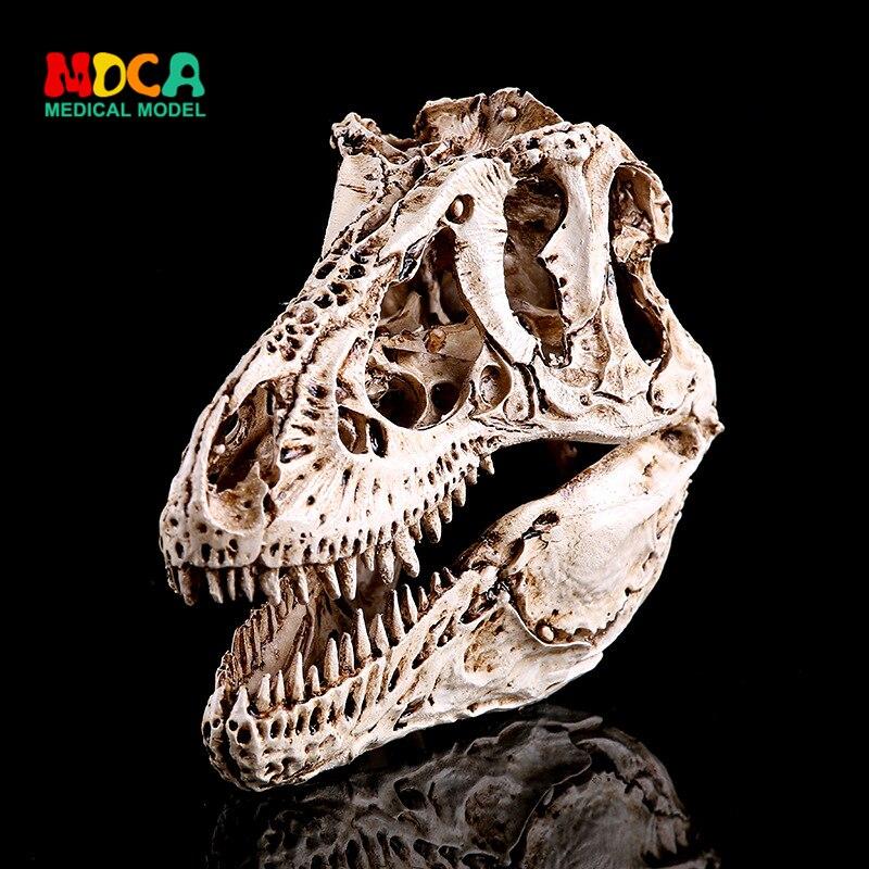 Resin handicraft study room resin skeleton head white tyrannous dragon bone dinosaur specimen KLGT010Resin handicraft study room resin skeleton head white tyrannous dragon bone dinosaur specimen KLGT010