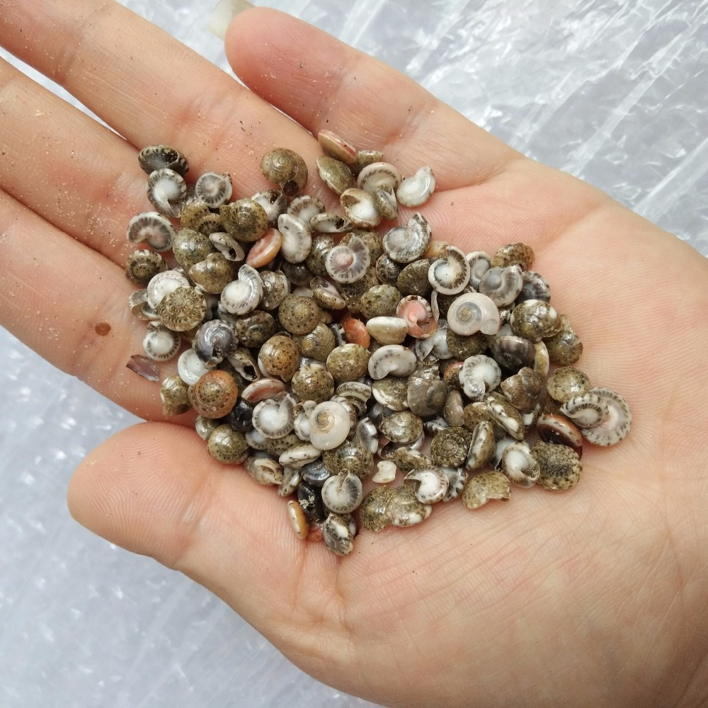 Happy Kiss MINI 200pcs/Lot Small Miscellaneous Conch Natural Craft Sea Shell Aquarium Fish Tank Landscape Home Decor DIY Bottle