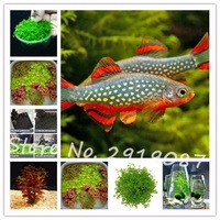 Free-Shipping-300pcs-bag-Water-Grass-Aquarium-Callitrichoides-Seeds-Mini-Leaf-Fish-Tank-Decoration-Ornament-Landscape.jpg_200x200