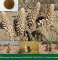 Wild Desert Panax Ginseng CISTANCHE TUBULOSA 10:1 Extract Powder 200g