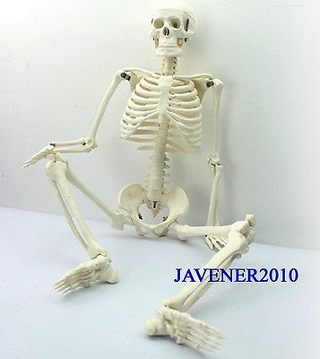85cm Human Anatomical Anatomy Skeleton Medical Model +Stand Fexible human female pelvic section anatomical model medical anatomy on the base