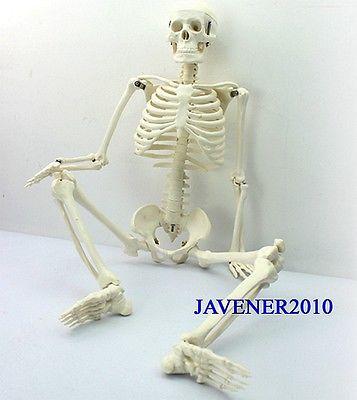 Modèle médical de squelette d'anatomie anatomique humaine de 85 cm + support flexible