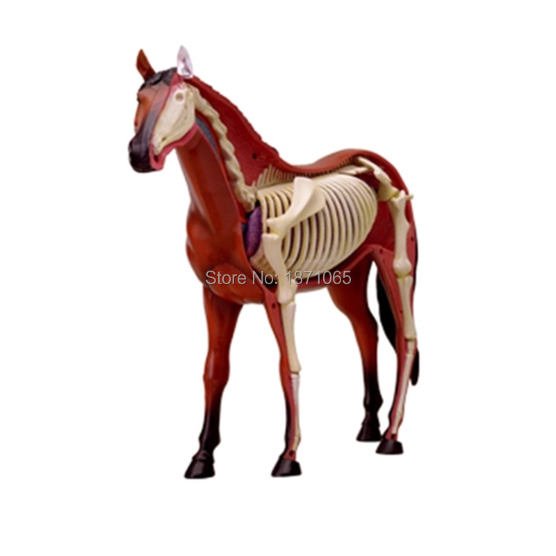 Anime 3D 4D Vison Horse Pig Cow Anatomy Medical Anatomic Animal ...