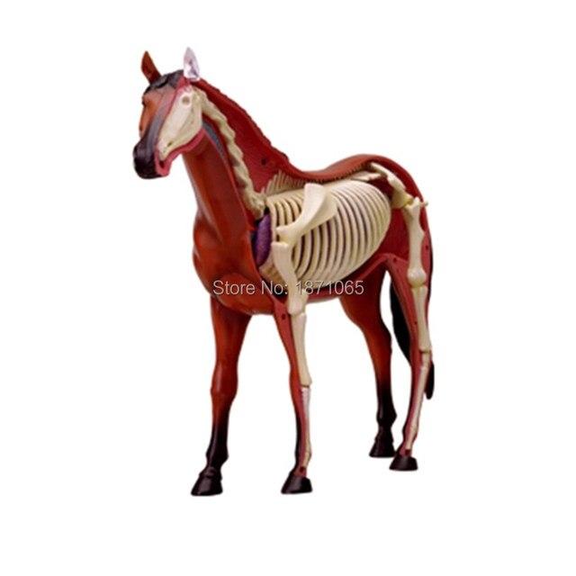 Online-Shop Anime 3D 4D Vison Pferd Schwein Kuh Anatomie ...