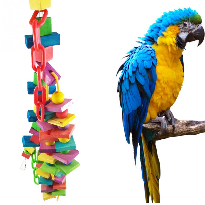 Parrot Supplies - Cages, Feeders, Toys, Food, Treats, Perches & Accessories Parrots make extremely endearing pets, possessing extreme levels of intelligence, curiosity and playfulness. These beautiful birds boast colorful plumage and are a joy to look at.