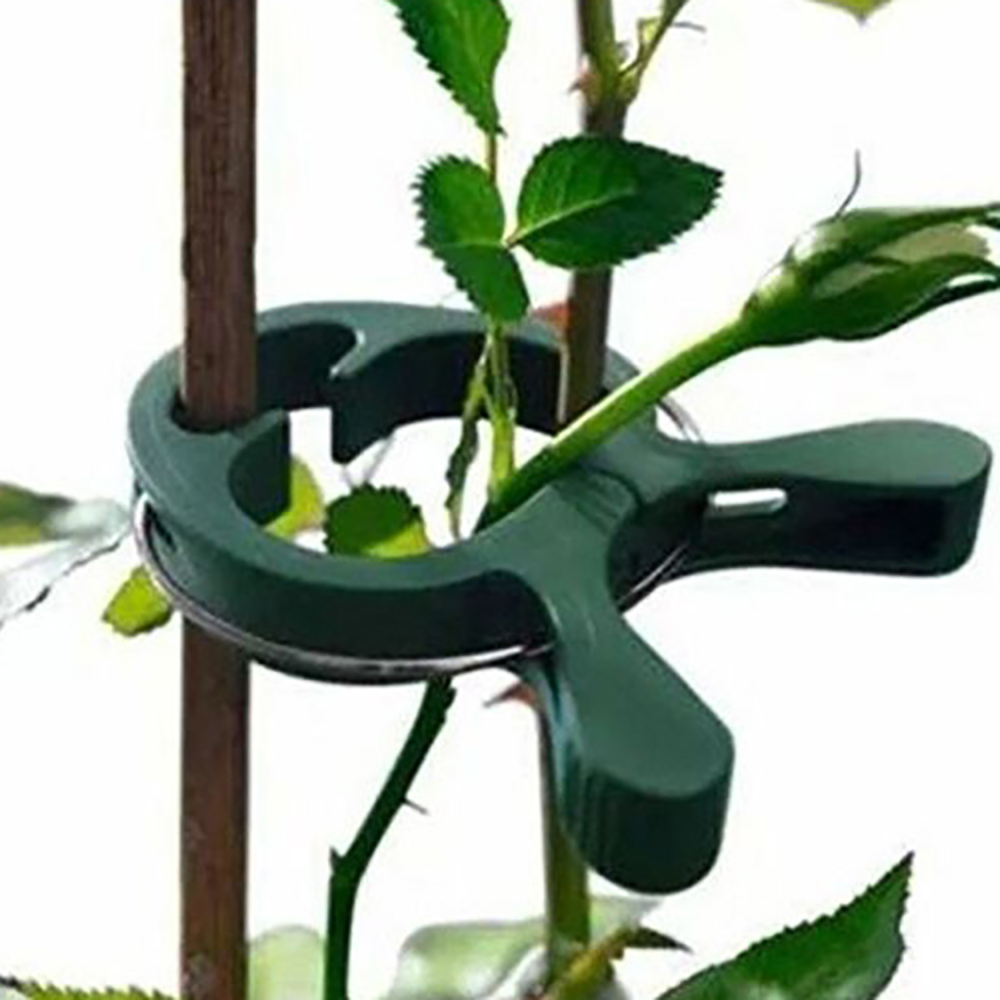 80pcs Garden Plant Fixed Clip Vines Grape Support Fastener Vegetables Flowers Tied Buckle Clamp Greenhouse Bracket