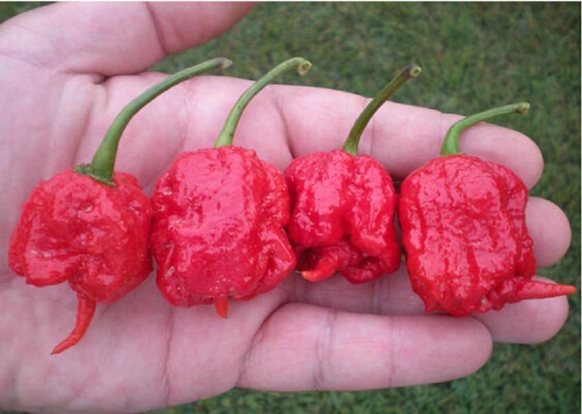 100 vegetable fruit pepper seeds, Giant chili seeds <font><b>sweet</b></font> pepper <font><b>Carolina</b></font> Reaper hot chilli bonsai plant potted