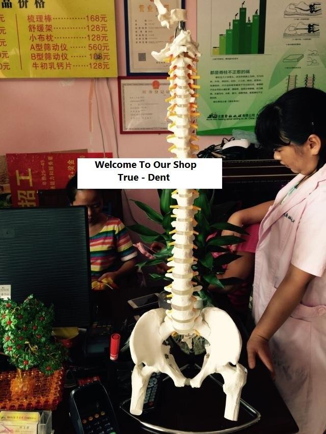 La articulación del hombro de médico humano anatomía modelo de ...