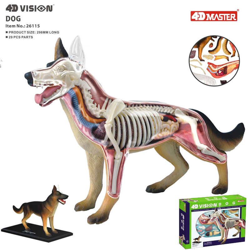 Dog 4d Master Puzzle Assembling Toy Animal Biology Organ Anatomical Model Medical Teaching Model