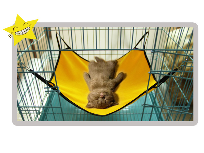 hammock com coolaroo with pet dog style xl elevated knitted bed fabric jostudiosonline