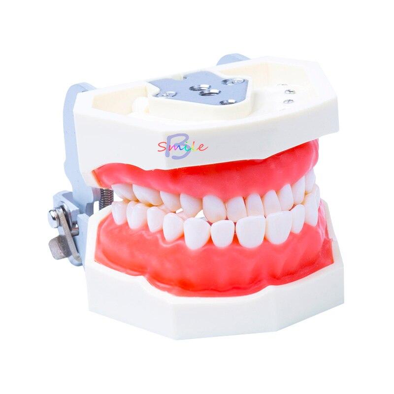 Nouveau modèle d'enseignement dentaire modèle Standard dents amovibles modèle de gomme molle