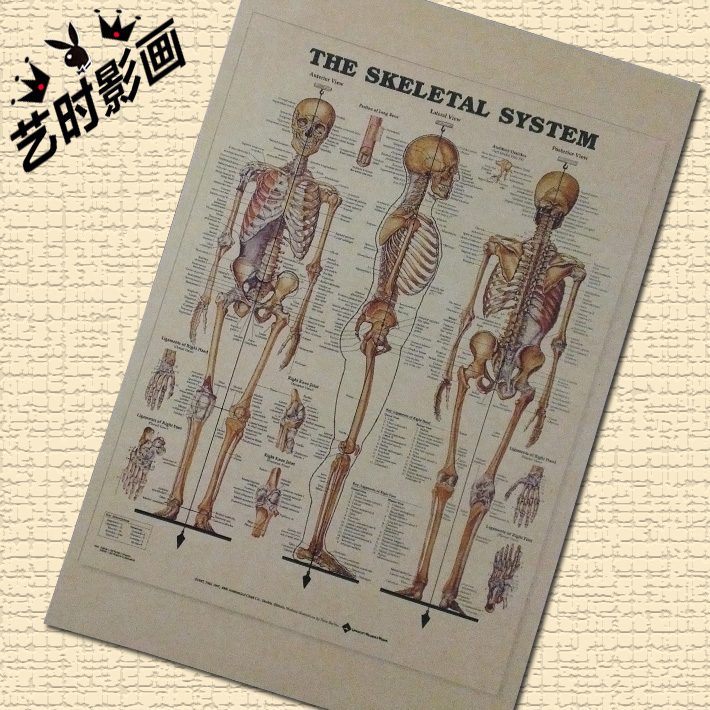 TOP COOL -2 piece  the skeletal system  vintage retro print art- HOME bar coffee house Decor ART --Free shipping cost