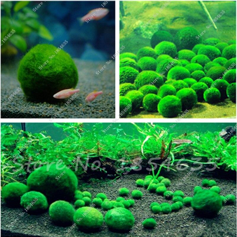 Popular indoor water tanks buy cheap indoor water tanks for Fish aquarium garden