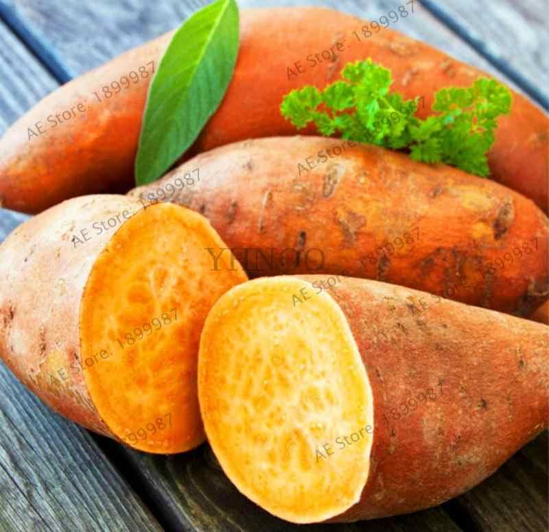 200 Pcs ziemniaków Organic Bonsai roślin warzywa owoce słodkie zdrowa kuchnia gotowanie żywności ogród roślin NON GMO