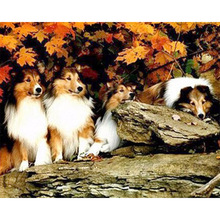 Megayouput FULL Diamond Embroidery 5D Dogs Collies image Handcraft  Mosaic Painting Cross-Stitch Kits Decor picture