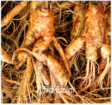 100 Seeds/Bag New Fresh Seeds Chinese Ginseng , Panax ginseng Seeds , Potted Bonsai Plant Flower Seeds for Home Garden(China)