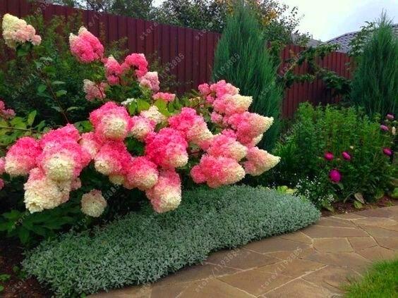 выращивание растений земляники