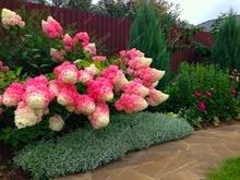 Buy  ial outdoor indoor bonsai etc easy to grow  online