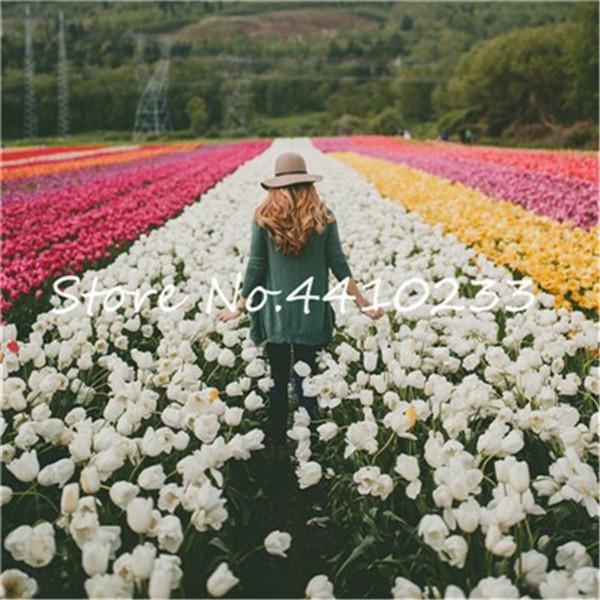 Bonsai 100 sztuk Bonsai tulipan (nie tulipan żarówki) 24 odmiany Rainbow Tulip wysokiej klasy kwiat doniczkowa roślina najpiękniejsza * kolorowe tanie i dobre opinie Kwitnące rośliny Mini duże małe średnie Wykluczone Bardzo proste Wieloletnich Umiarkowany Upiększających Raka