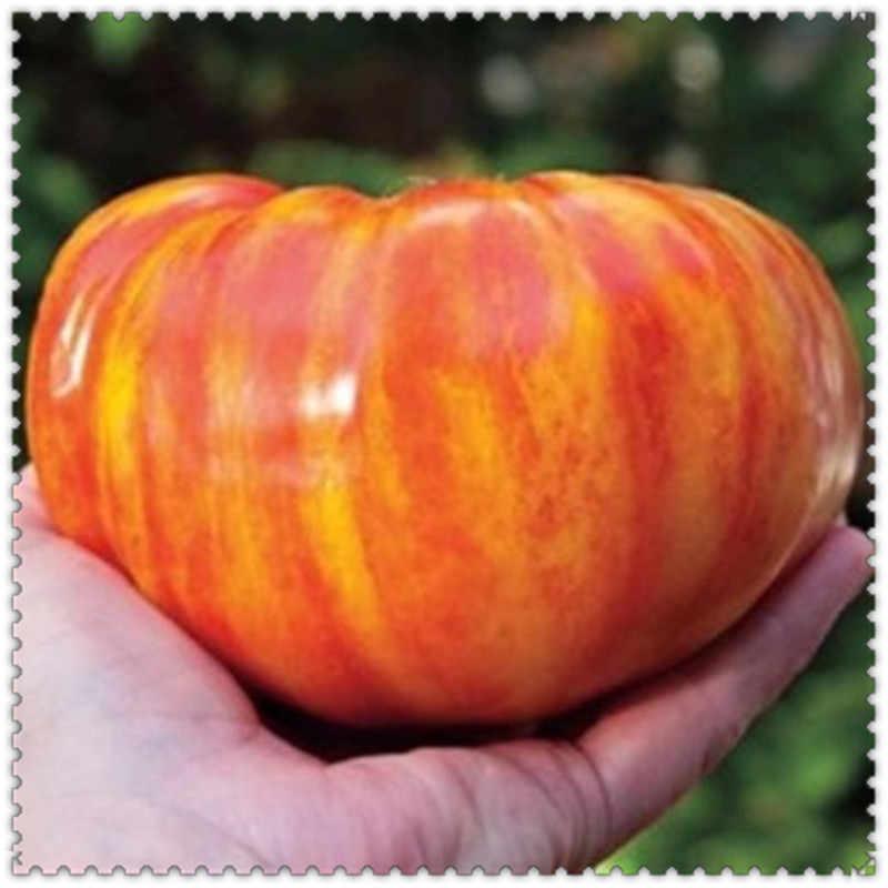 ขาย! 100 ชิ้น/ถุง Giant พืชมะเขือเทศอินทรีย์ Heirloom พืชผักยืน Non - GMO พืชหม้อสำหรับปลูกบ้านสวน