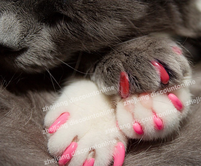 Free Shipping 60pcs Soft Cat Pet Nail Caps Claw Control Paws Off With Adhesive Glue Size Xs S M L