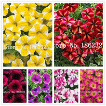 Bonsai 100Pc Climbing Petunia Plants Melissa Original Flower Plantas Perennial Flowers For Home Garden Pot Planting Easy to Grow(China)