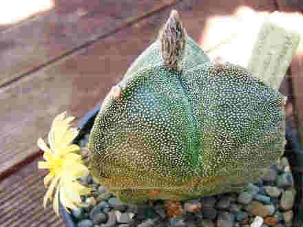 200pcs Real mini cactus seeds, rare succulent perennial herb plants,bonsai pot flower seeds, indoor plant for home garden