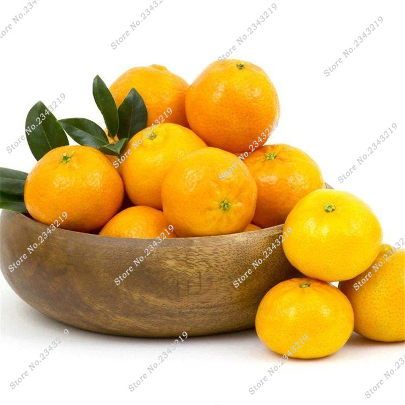 Best-Selling! Delicious Orange Seed Tangerine Citrus Home Garden Terrace Lovely Bonsai Perennial Tree Easy Grow 30 Pcs / bag