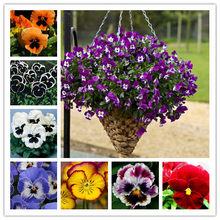 Viola pansy bonsai 200 pcs pansy rare plants Home & Garden Plant Indoor Bonsai yard Flower Free shipping Hot selling easy grow(China)