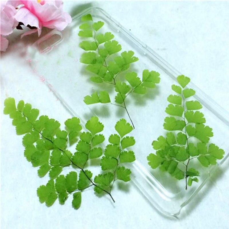 120 шт. 6-11 см прессованные сушеные адиантум Capillus-veneris L. листья растение гербарий для ювелирных изделий кулон ремесло изготовление аксессуаро...