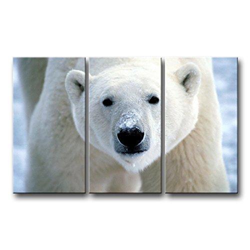3 piezas pared arte pintura Oso Polar cara Closeup impresiones en lienzo la imagen imágenes animales Envío Directo