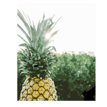 WEEN Pineapple Diy Oil Painting Paint By Number Kit For Adult Kids Flower Numbers Living Room 16x20 inch Gift