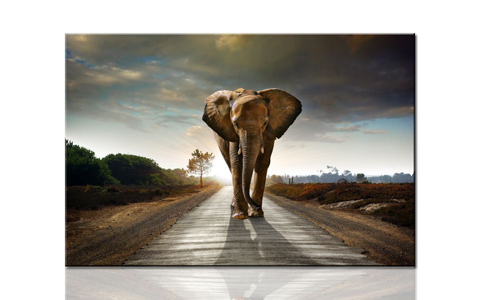 W717 Huge Elephant Coming, Large HD Canvas Print Painting