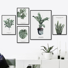 Watercolor Plant Monstera Deliciosa Wall Art Canvas Painting Nordic Poster And Prints Pictures For Living Room Home Decor