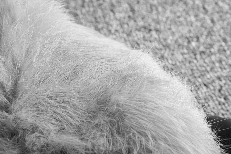Section Lapin vent Noir À Witner Mode Femelle En Femmes Fourrure Longue Lâche Automne Lacets Manteau Rétro Coupe Réel Nouveau Col dYtwTHqPw